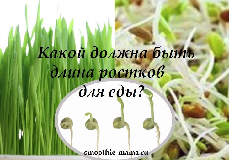 Какой должна быть длина ростков для еды? -надпись на коллаже из фото пророщенных зерен
