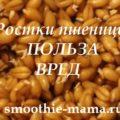 Ростки пшеницы польза вред - надпись на фото пророщенных ростков пшеницы