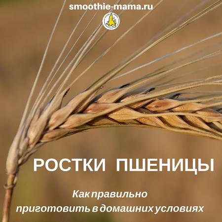 Пророщенная пшеница, зерно с проклюнувшимися ростками обладает мощной живительной силой для организма человека. Но только в том случае, если ростки и зерно подготовлено правильно. Как это сделать в домашних условиях и своими руками узнайте в статье #рецепты #зож #смузимама