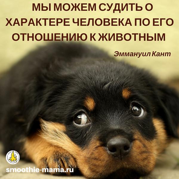 Цитаты веганов о животных #motivation #quotes #vegan #смузимама